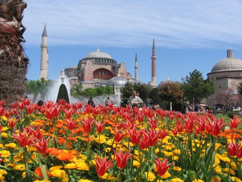 tulips-istanbul